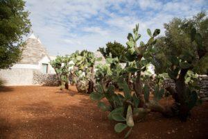 zizzi garden center - agronomo vivaio