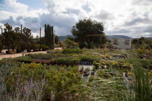 zizzi garden center - progettazione giardini