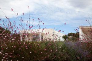 Giardino Villa con Piscina Ostuni #2