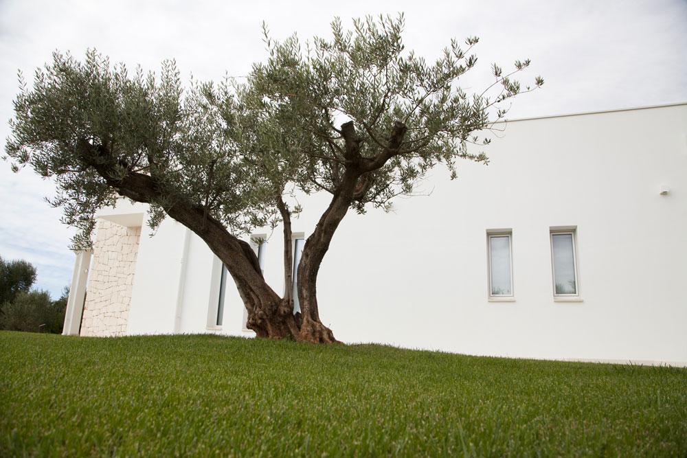 Giardino Villa con ulivi e piscina a Ostuni #2
