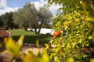 Giardino mediterraneo Villa Piscina Ulivi Ostuni #3