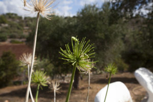 Giardino mediterraneo Ostuni #4