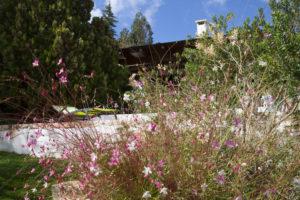 Giardino mediterraneo Villa Ostuni #4