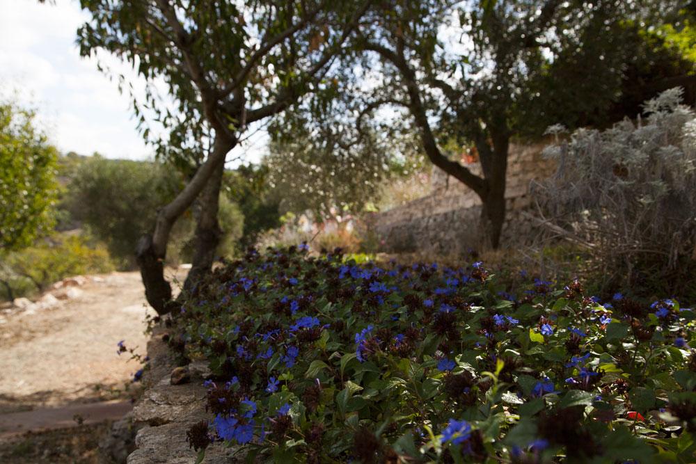 Giardino mediterraneo a Ostuni #4