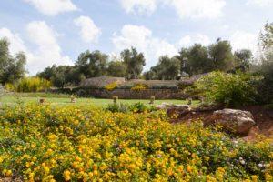 Giardino design Villa Ceglie Messapica #6