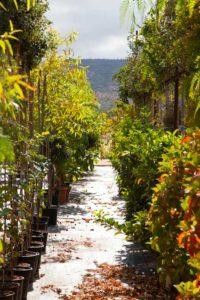 zizzi garden center - giardinieri in zona fasano ostuni puglia