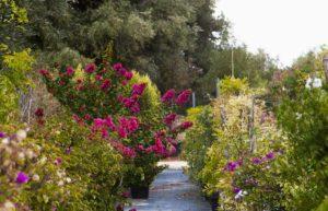 Vivaio in Puglia - Zizzi Garden Center