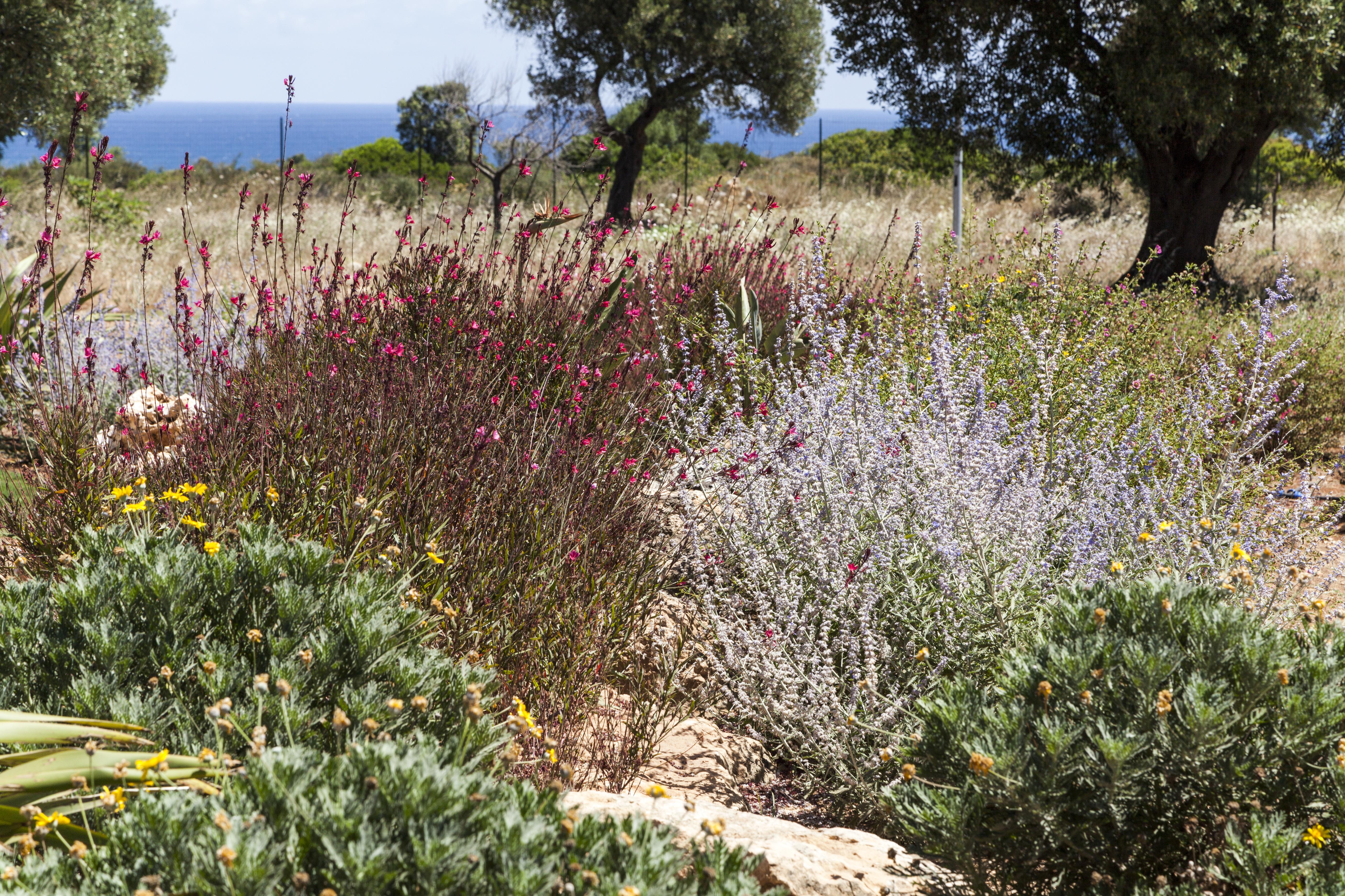 Il giardino mediterraneo al tempo della Xylella