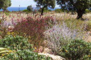 Giardino mediterraneo Villa Carovigno #7