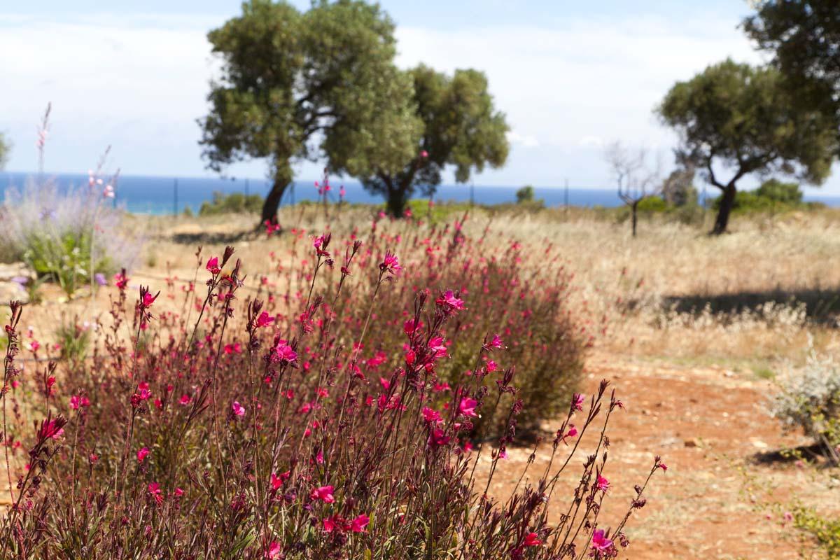 Giardino mediterraneo Villa Ceglie Messapica #7