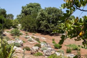 Giardino con ulivi Carovigno #7
