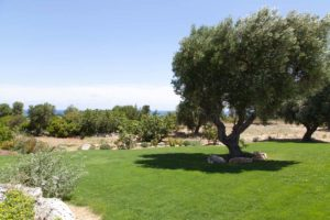 progettazione giardini con ulivi Villa Carovigno #7