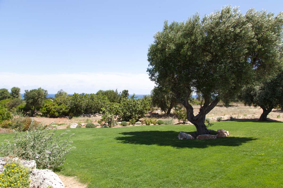 Giardino Piscina Villa Ceglie Messapica #7
