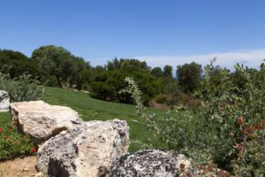 progettazione giardini mediterranei con ulivi #7