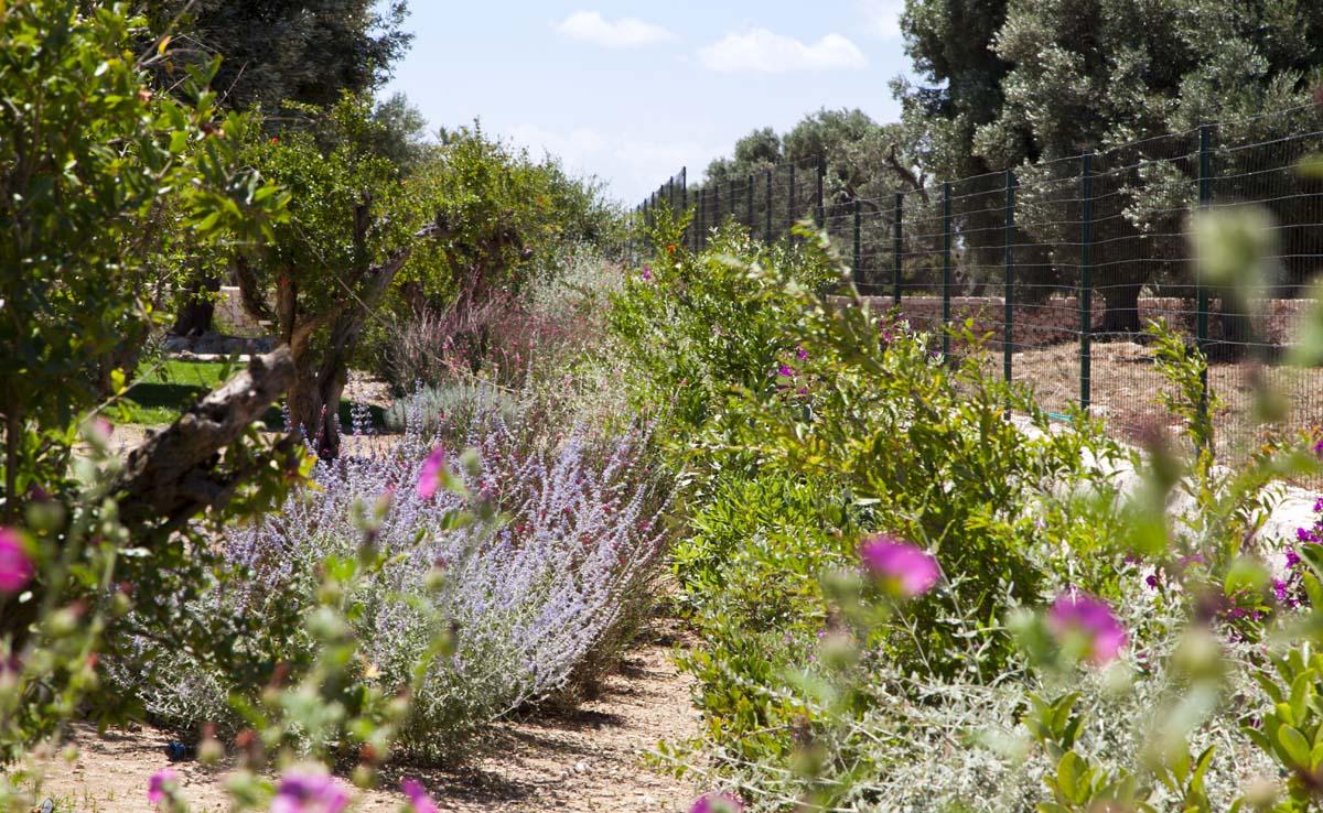 Piante mediterranee Vivaio Ceglie Messapica #7