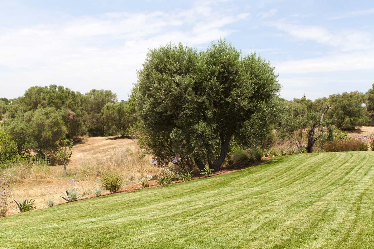 Progettazione Giardini con ulivi Ostuni #8