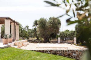 Progettazione Giardini ulivi Brindisi Ostuni #8