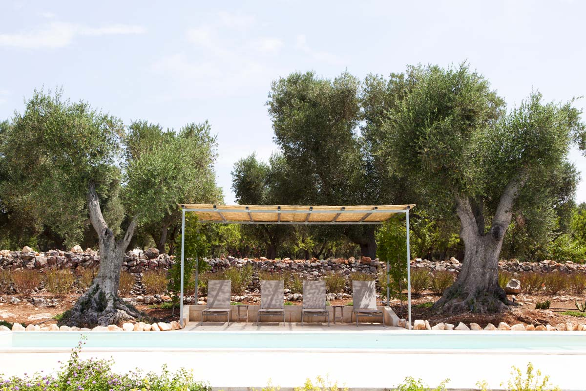 Giardino con ulivi Brindisi Ostuni #8