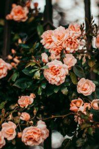 fiori da mangiare - zizzi garden