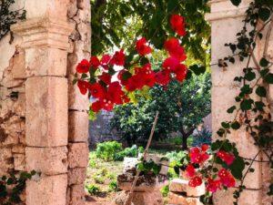 Giardino fiori antica masseria Ostuni #9