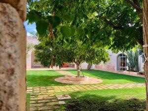 Giardino interno antica masseria Ostuni #9