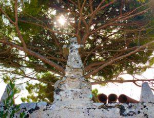 Giardino quercia antica masseria Ostuni #9
