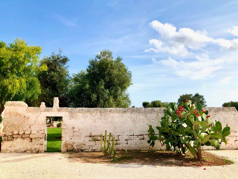Giardino fico d'india antica masseria Ostuni #9