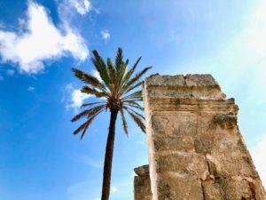 Giardino con palme antica masseria Ostuni #9