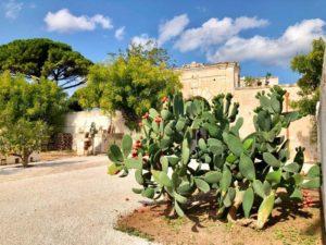 Giardino Villa antica masseria Ostuni #9
