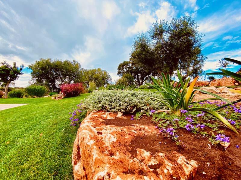 Giardino mediterraneo ulivi Cisternino #10