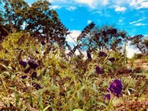 Giardino mediterraneo a Cisternino #10