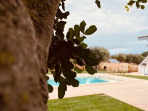 Progetto Giardino piscina trulli e ulivi villa Cisternino #10