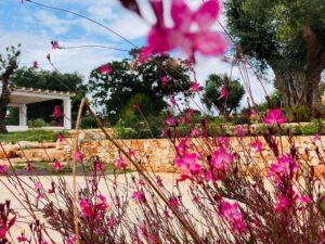 Giardino mediterraneo e ulivi villa Cisternino #10