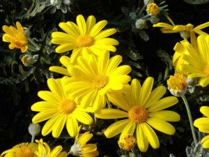fioriture invernali